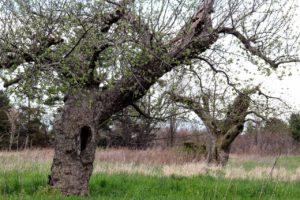 Old Orchard west of Watkins Glen